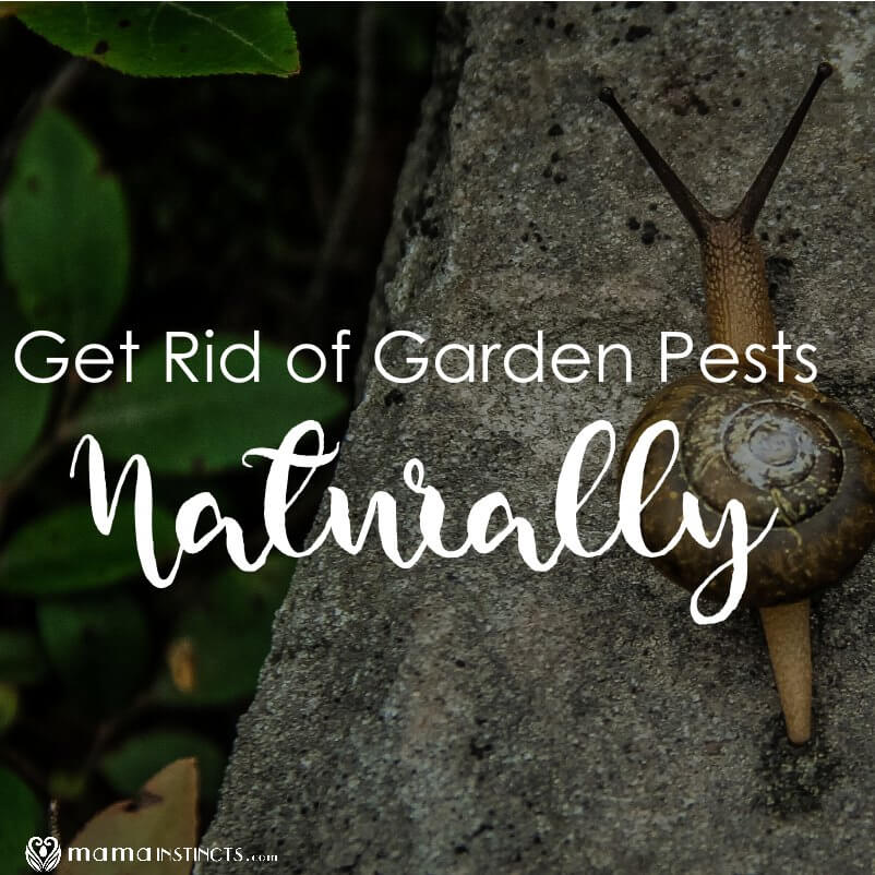 How To Get Rid Of Garden Pests Naturally Mama Instincts